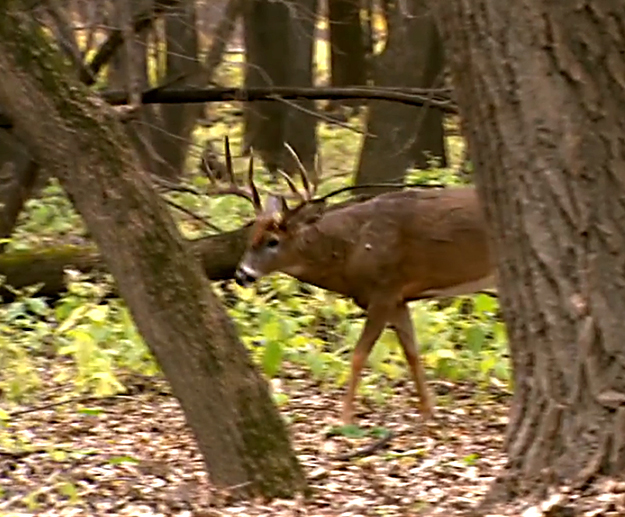 DNR Deer Season 2015